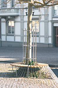 BGS 5, BGS 6 Sitzbank für Baumschutzgitter